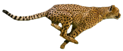 The Project Cheetah!